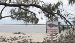 Beware of Stonefish - expo by Wanda Michalak 29.11.2014
